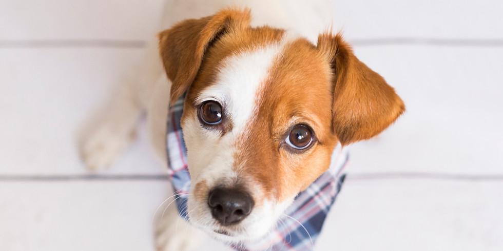 SEW A DOG BANDANA | VIRTUAL WORKSHOP | £5