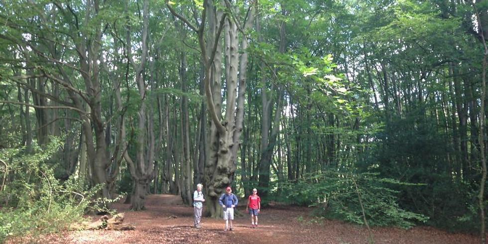Local Walk: Location TBC - May 2021