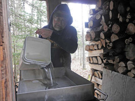 Pouring sap into the maple syrup cooker