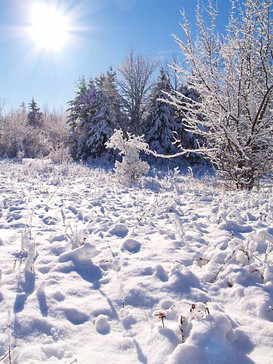 Sparkling winter day at home.