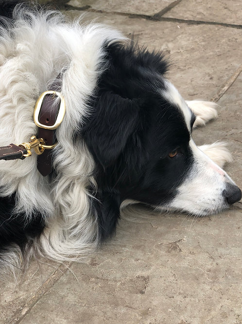 Dog lead and Collar workshop