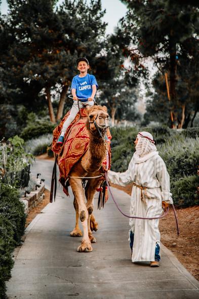 Arabian Night Camel Rides