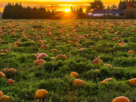 Pumpkin: The Healthy Recovery Superfood for Athletes