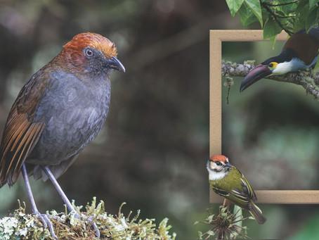 Mejores lugares para fotografía de aves en Colombia
