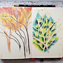 fall trees 1