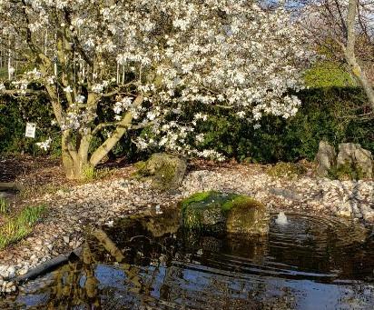 Beautiful tranquility in Arboretum