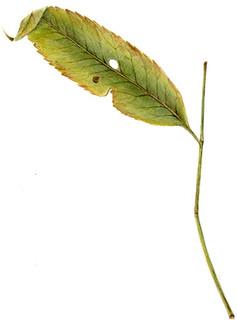 alone leaf.jpg