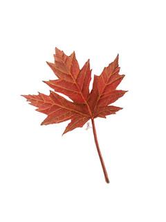 b_leaf.jpg