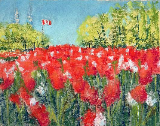Tulip festival. Ottawa