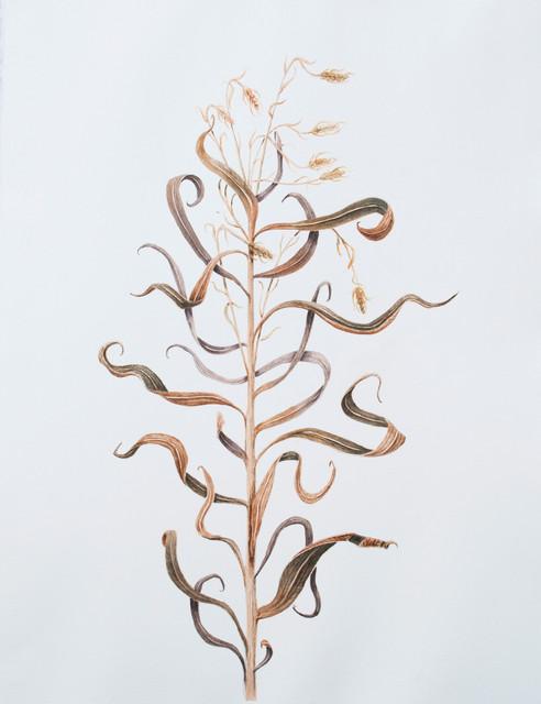 Watercolor Dry plant.jpg