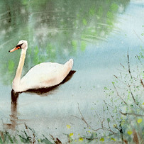 Swan 2018