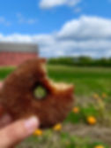 Cider Donut in front of big red barn pum