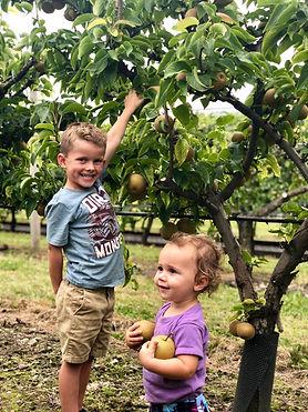 boy and girl pear picking.jpg