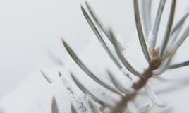 Saison des Fêtes: Le guide des soins de la peau au naturel - 4 entreprises consciencieuses d'ici à connaître