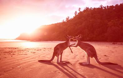 Secrets de beauté australiens - Lano & Alya Skin: 2 marques prisées aux ingrédients uniques