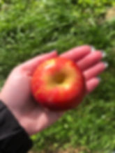 Les Vergers Boileau - La nouvelle pomme écoresponsable Ariane