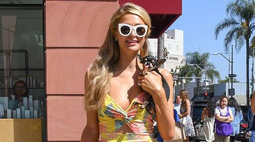 Paris Hilton's Chihuahua Diamond Baby Involved In Wedding Preparation