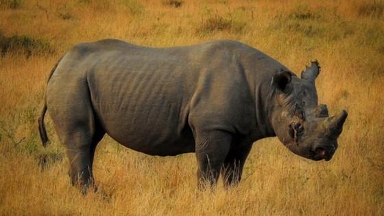Ngorongoro Crater's Fausta Dies At 57
