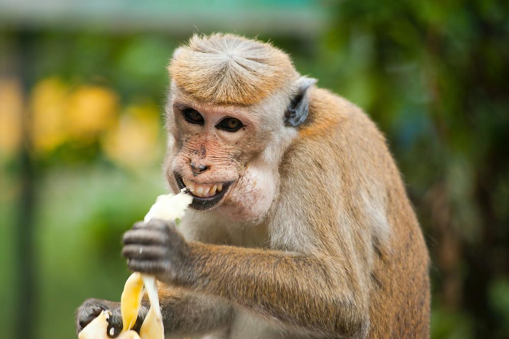 reuse banana hergebruik bananenschil zero-waste