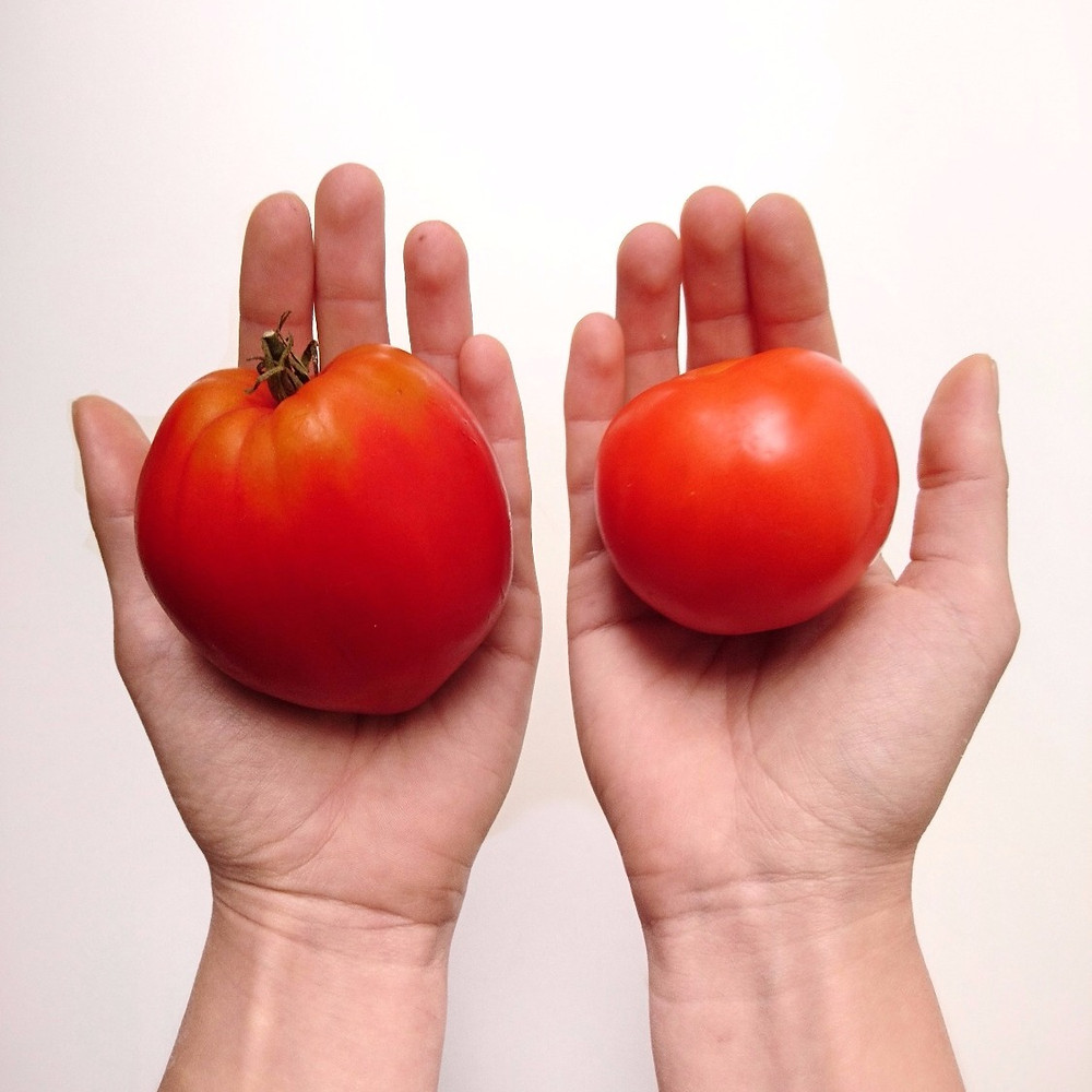 Right: tomato from supermarket. Left: tomato from zero-waste shop, Miuxua