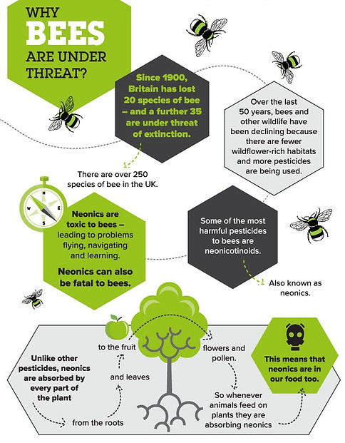 CONTENT-why-bees-are-under-threat_edited