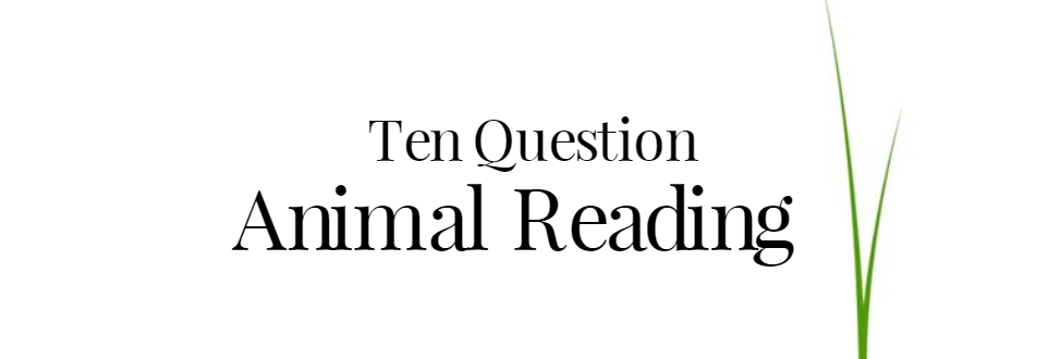 Ten Question Pet Psychic Reading