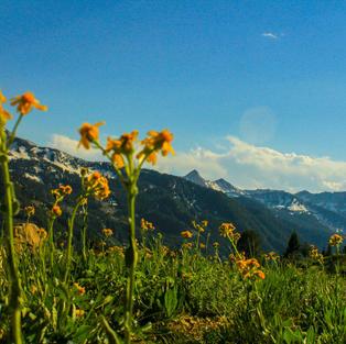 Flowers with Pfeifferhorn by Mikayla Rewey