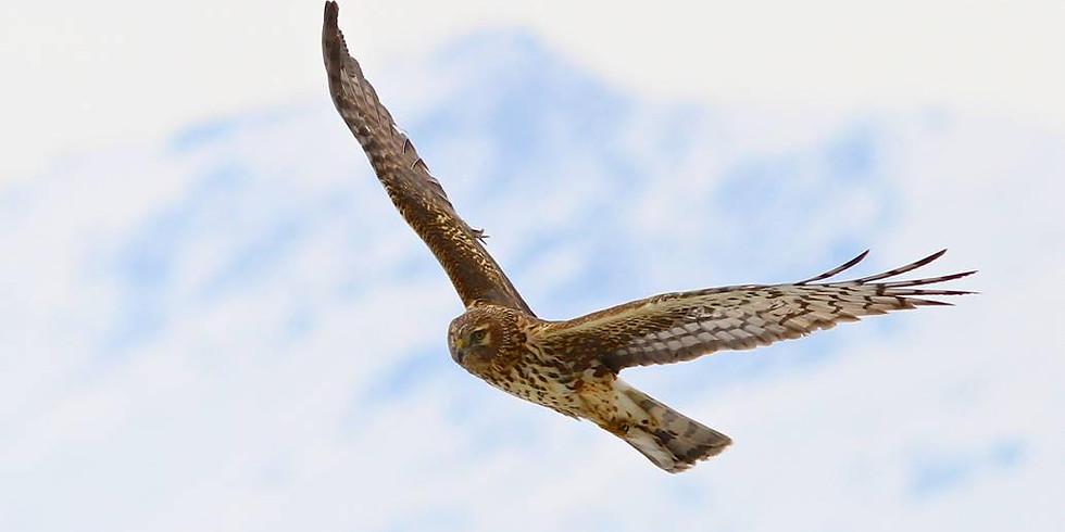 HawWatch Live Bird Show & Hike