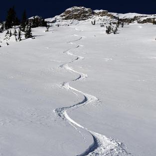 Backside Ski Track by Lee Cohen
