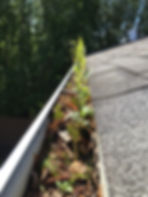 If your gutters look like this then you need an excellent gutter cleaning company. Roof leaks, gutter cleaning, best gutter cleaning, roof cleaning, window washing