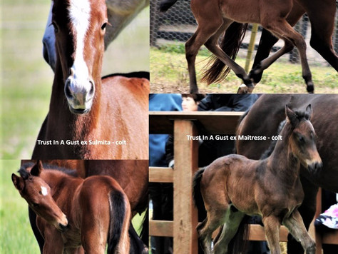 Breeders Trust Repaid with Quality First Foals
