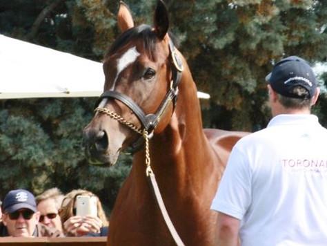Toronado foals dominate Tattersalls Sale