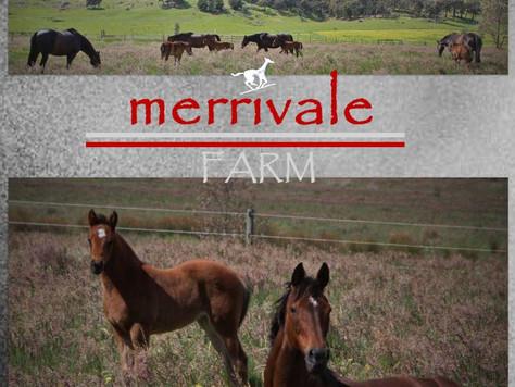 Swettenham Breeders Profile – Jen Fowler at Merrivale Farm