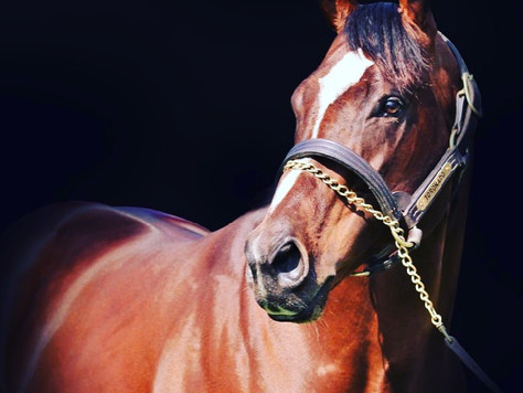 Toronado to Emulate High Chaparral's Legacy