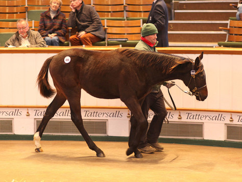 Exceptional Toronado foal tops Tattersalls