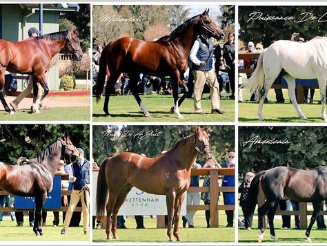 Swettenham Stallions the Best of the Best