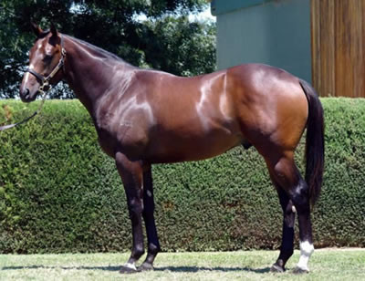 Pictured as a Yearling