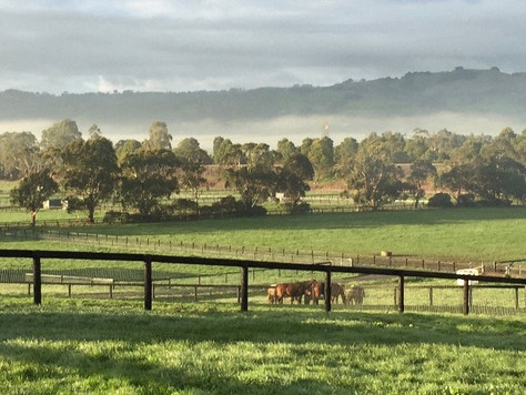 Swettenham Stud Breeder Profile – BALIUS FARM THOROUGHBREDS