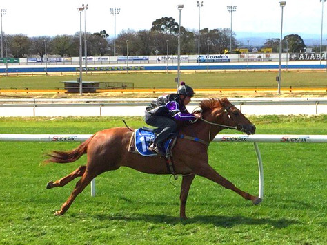 Americain colts in focus for Inglis 2YO Sale