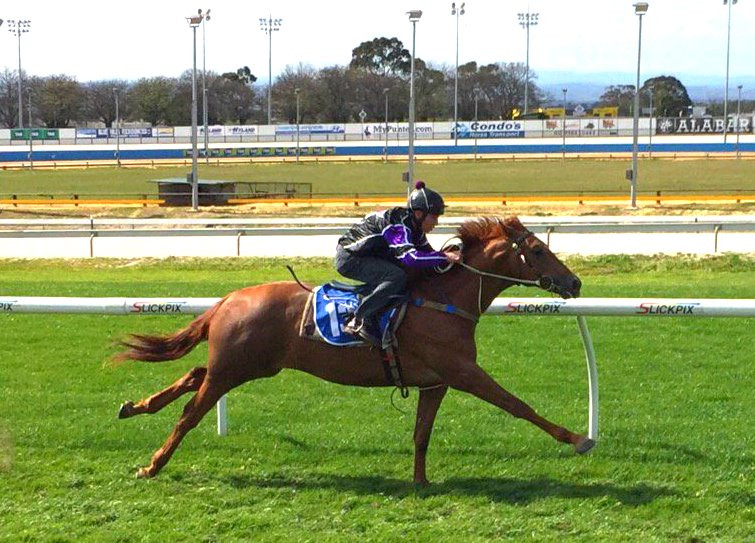 PHOTO:  Americain colt from Zadiamond in action at Cranbourne