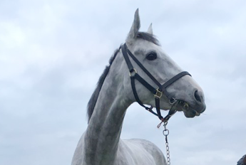 Puissance De Lune's Sister Stunning on Debut