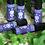 Thumbnail: Bear ~ Shamanic Medicine Oil