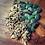 Thumbnail: Druid Perfumed Oil by Stag + Seer