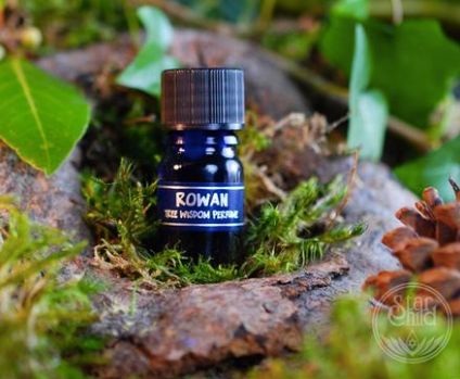 Rowan Tree Wisdom Oil