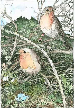 Robin - Art Print