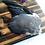 Thumbnail: Wild Pigeon Wing