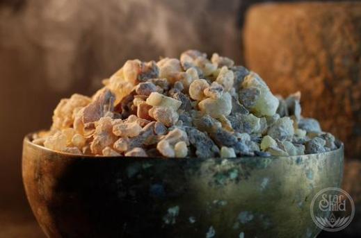 Frankincense Sacred Herb