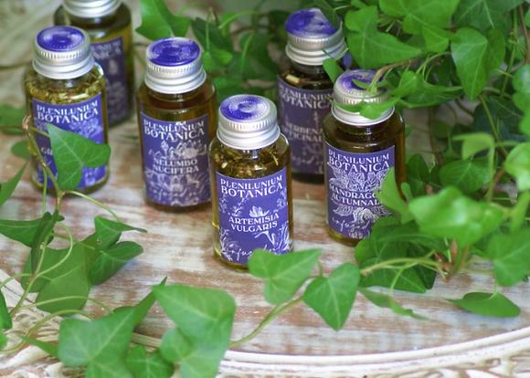 Artemisia Vulgaris Infused Oil
