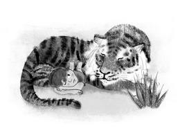 Tiger_Boy.jpg