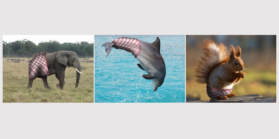 Fotos Tiere